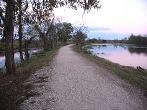 Alligator along trail