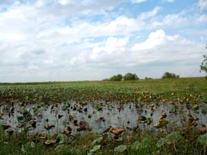 Katy wildlife preserve