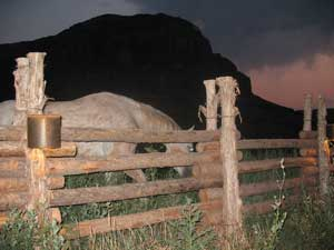 Horse Moab Utah