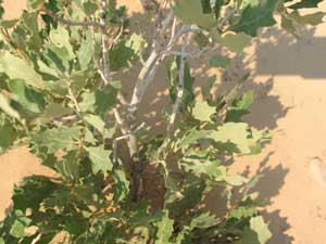 Plants in Utah