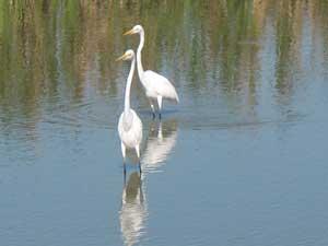 Birds Seabourn Park