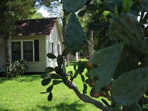 Cactus Rosenberg Texas