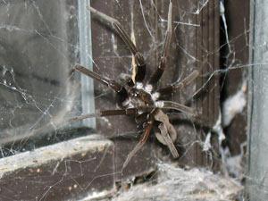 Spider in office