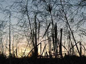 Plants at dusk