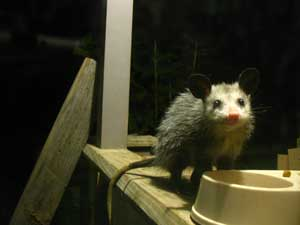Possum back porch