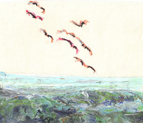 sea birds in oil pastel