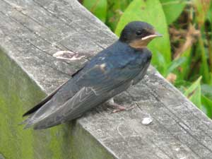 Baby bird Seabourn Park