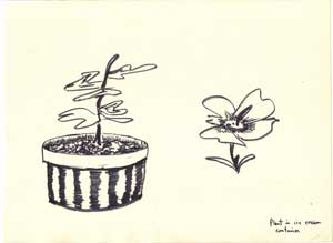Plant in ice cream bucket