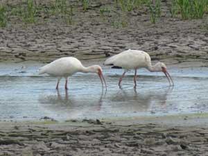 Bird Seabourn Park